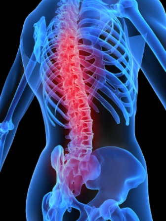 Osteopathy Bondi Junction Back Pain Skeleton